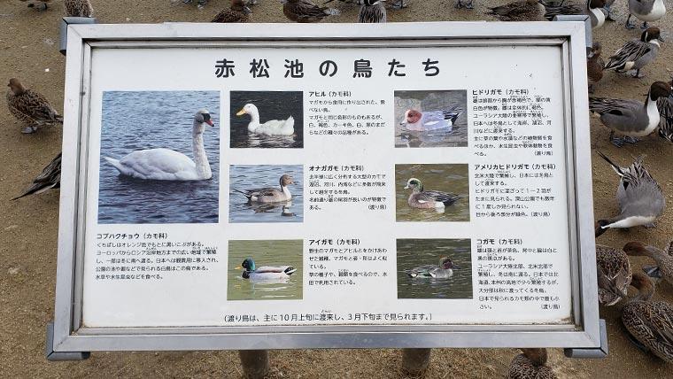 みやま公園 赤松池 看板