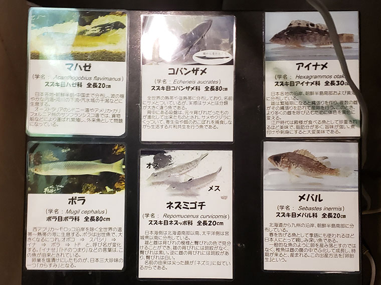 カブトガニ博物館 魚