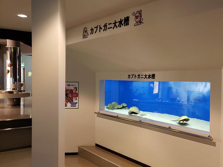 カブトガニ博物館 カブトガニ大水槽