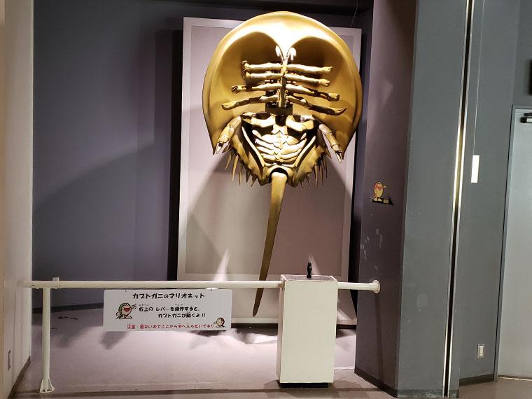 カブトガニ博物館 カブトガニのマリオネット