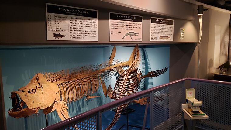 カブトガニ博物館 恐竜 化石