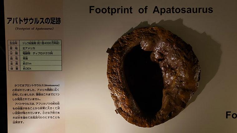 カブトガニ博物館 恐竜の化石