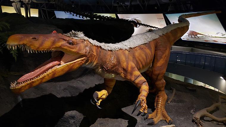 カブトガニ博物館 恐竜