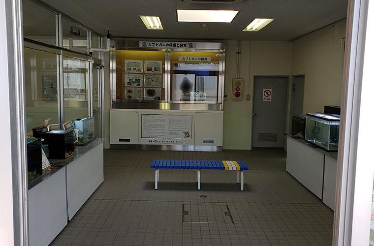カブトガニ博物館 飼育展示室